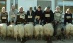 12 Rams 2